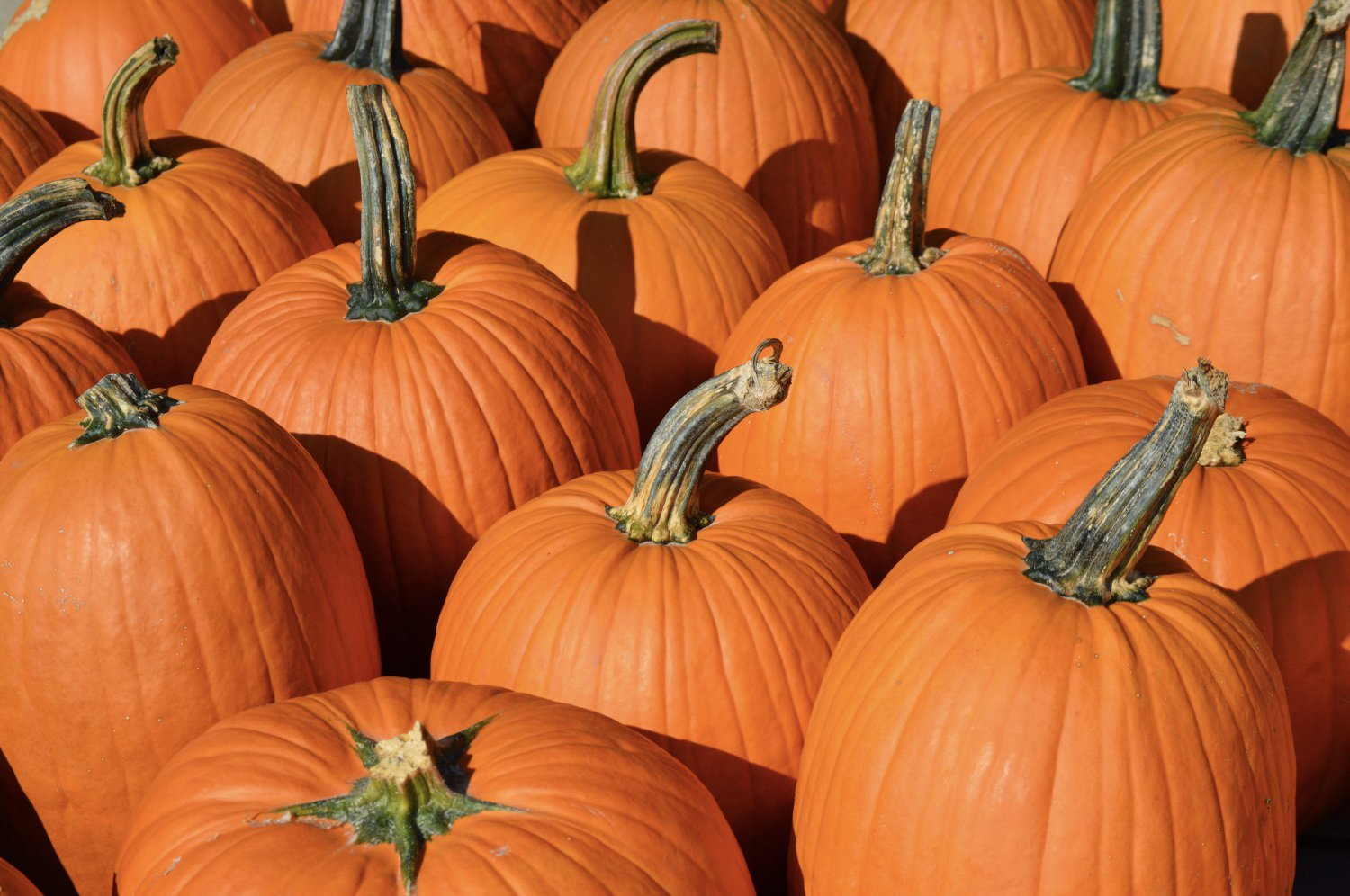 Thanksgiving Lull? Bitcoin Trades Sideways But Rally May Continue