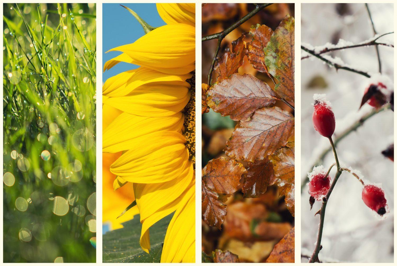 Planting Bitcoin Part Two: Seasons